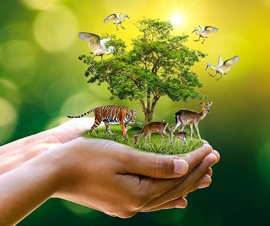 ECOTOURISM AND NATURE CONSERVATION (Proposed Bachelor's Degree)